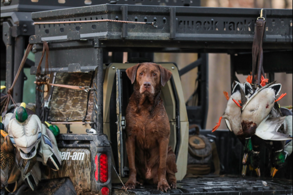 Gunner is the reason Edmonds has a business dedicated to duck dogs.