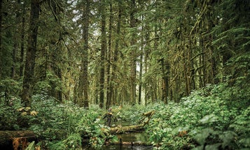 Biden Administration to Restore Roadless Rule Protections to Alaska's Tongass National Forest