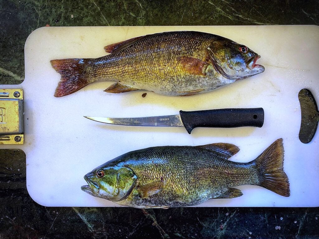 Fishing pressure during covid likely resulted in an increase in harvest rates of gamefish.