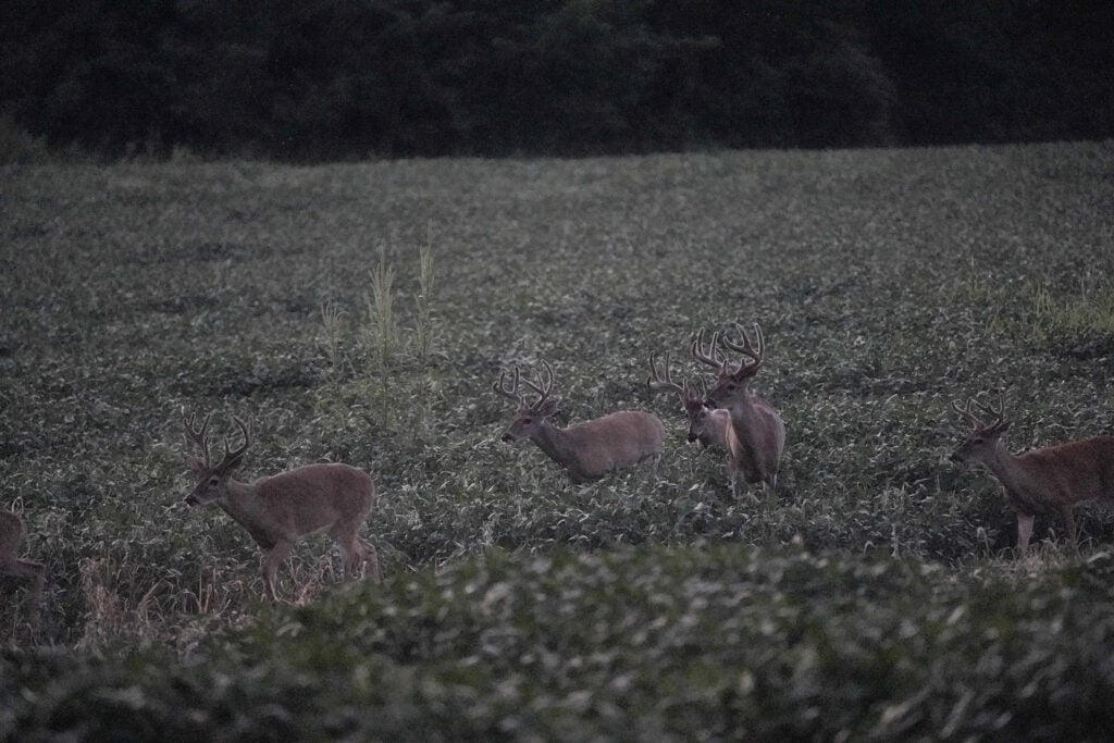 Targeting food sources is key to killing a velvet buck.