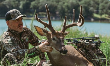 How to Tag a Velvet Whitetail Buck (and the Best States to Make It Happen)