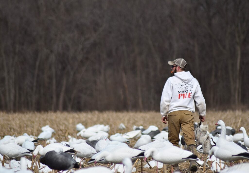 Snow geese could affect other waterfowl populations.