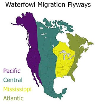The four waterfowl flyways.