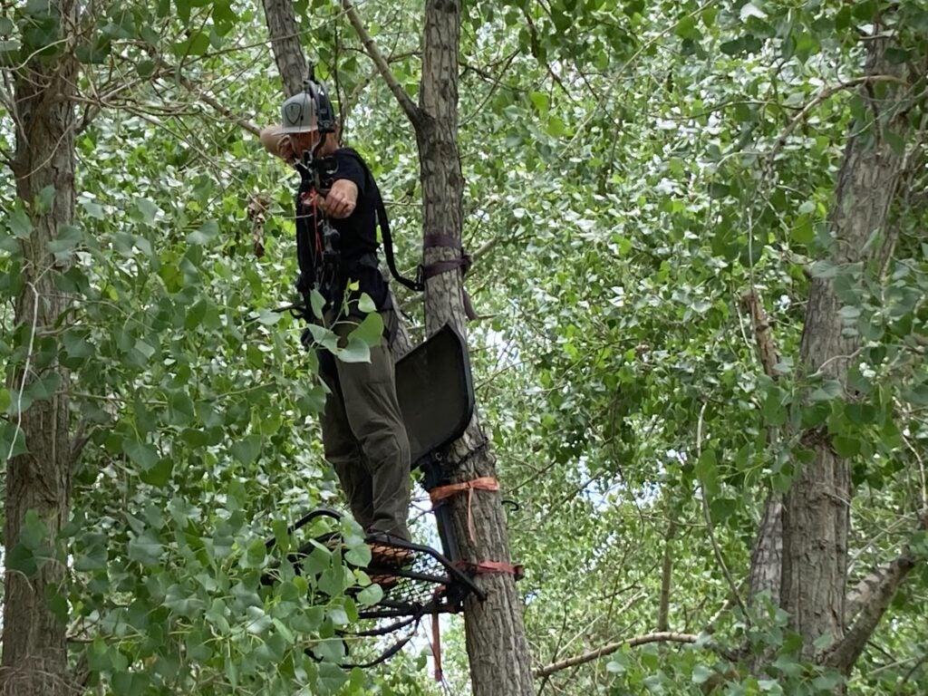 Hunter in treestand shooting a Bear Cruzer G2