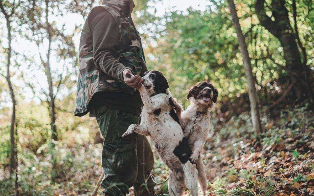 A mean wearing a hunting vest playing with two dogs into a green forest.