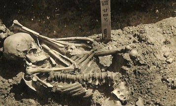 3,000-Year-Old Skeletal Remains Prove Ancient Shark Attack