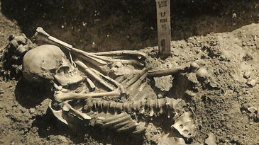 An ancient shark attack victim was uncovered in Japan.