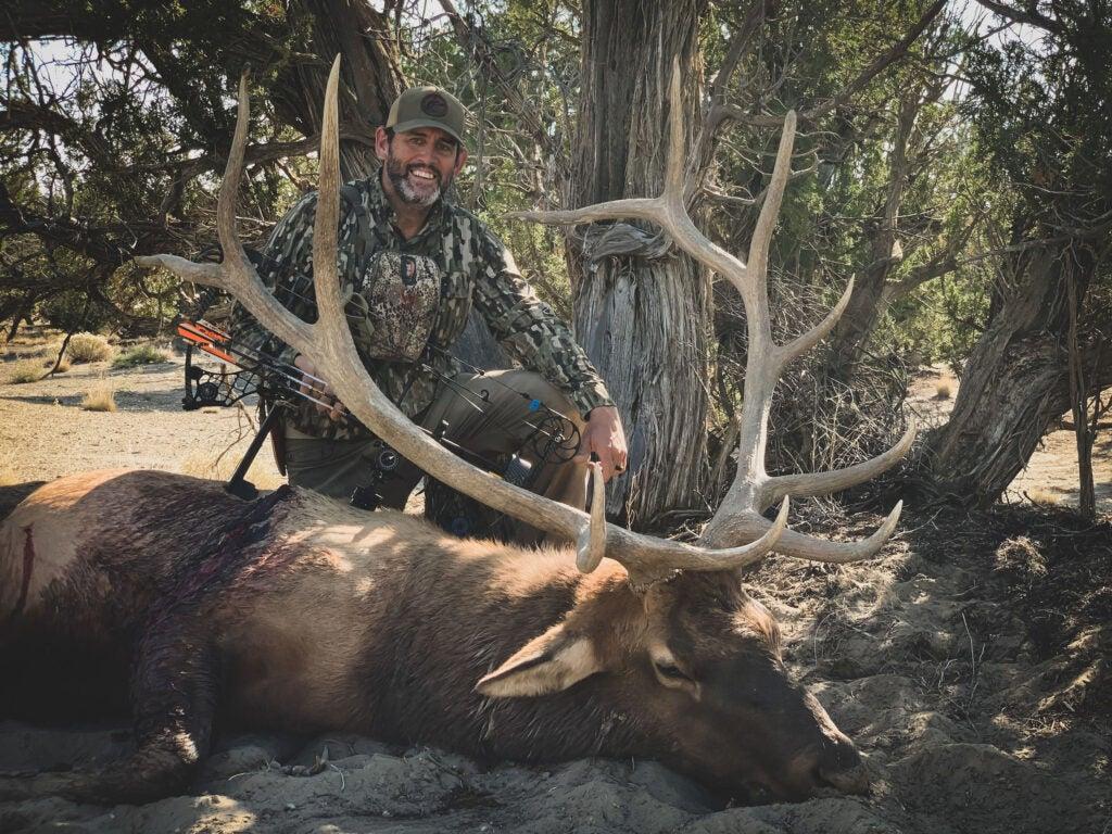 elk hunting bull