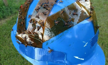 The Deer Fly Helmet: An Ingenious (and Redneck) Hack for Summer Work in the Woods