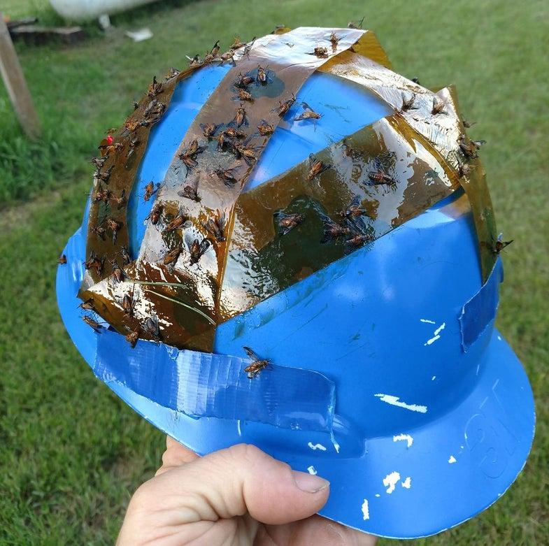 deer fly helmet
