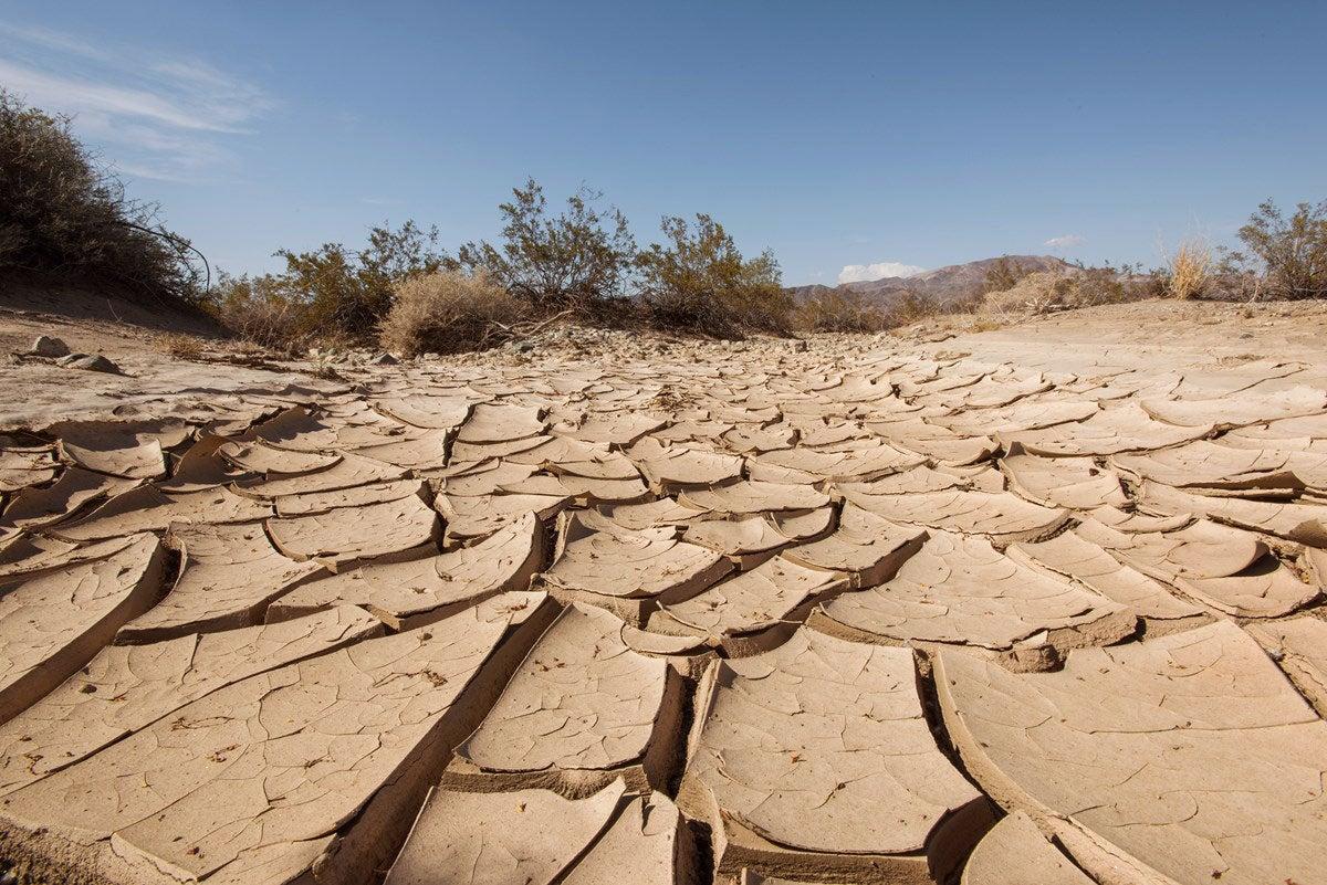 drought in joshua tree