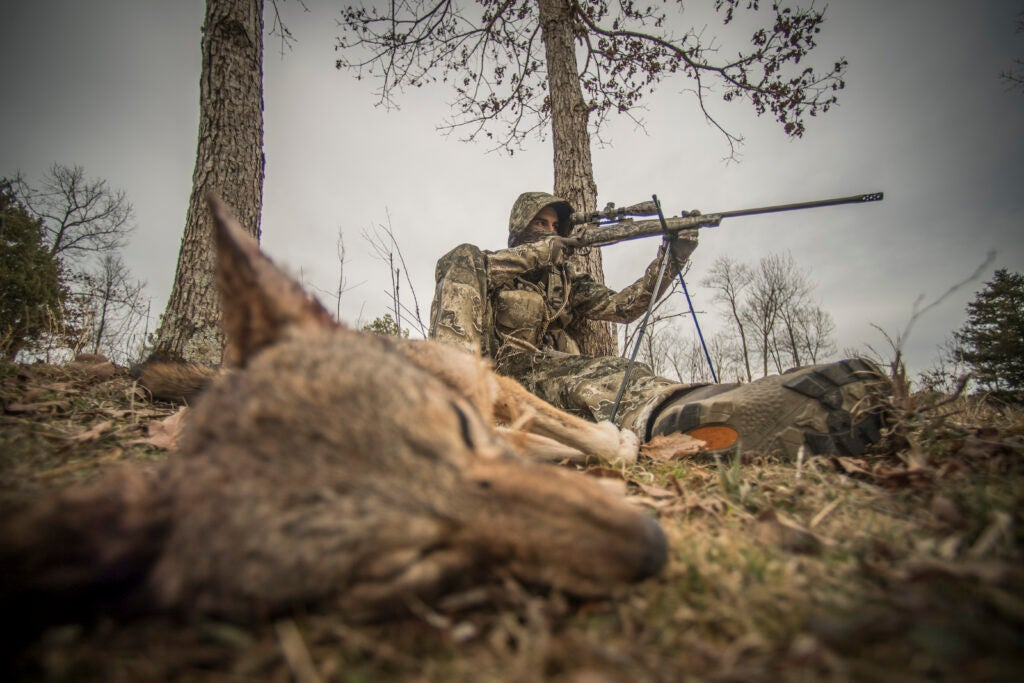 Trapping and hunting coyotes can help deer populations.
