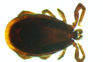 Health Officials Warn of a Rare Tick-Borne Disease Showing Up in New York