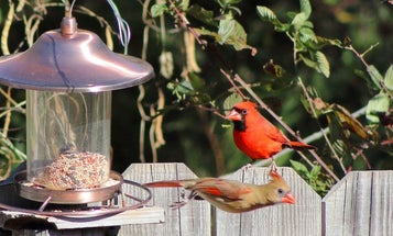 Best Bird Feeders: Stands and Poles for Cardinals, Hummingbirds and More
