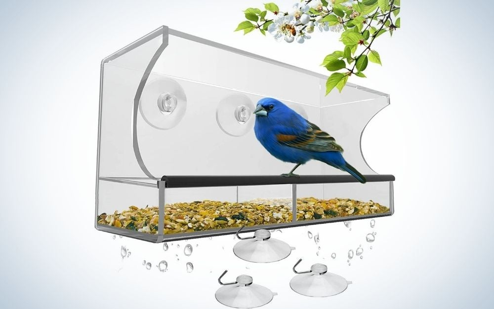 A translucent space that serves for bird food and inside the bird feed and a blue bird as well as three plastic holders for the food box.