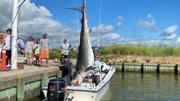 texas record shark