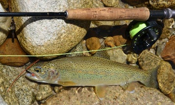 Montana and Idaho Address Low Water, High Temps for Trout with Different Regs