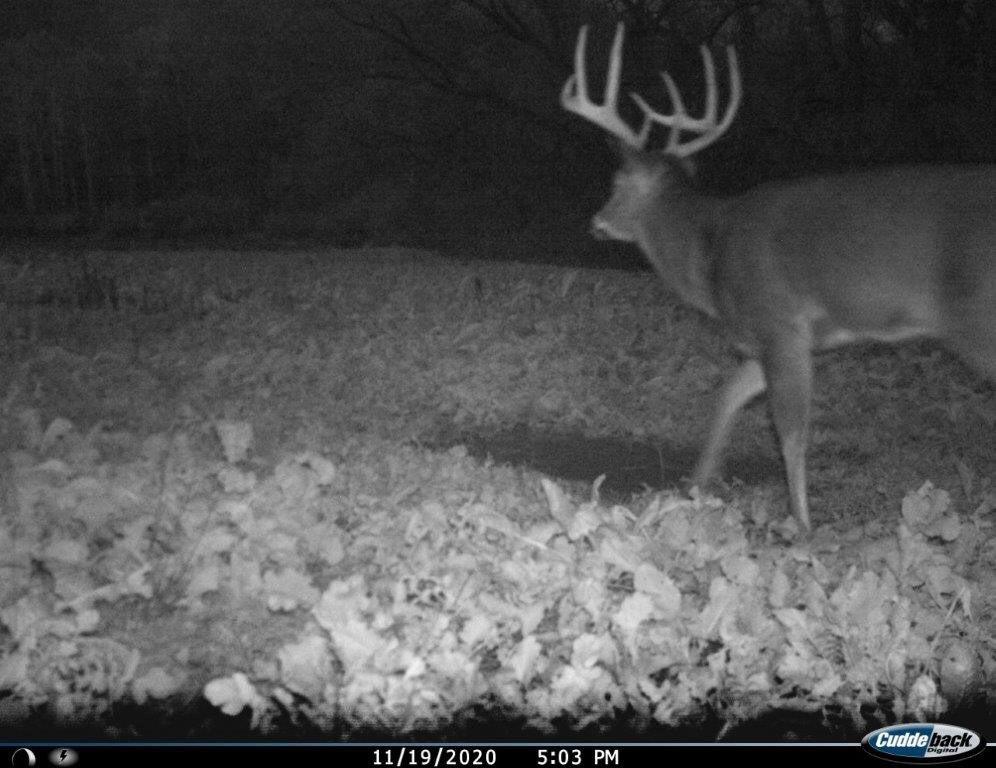 IR Flash buck not spooked