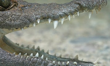 California Teen Attacked by 12-foot Crocodile in Mexico