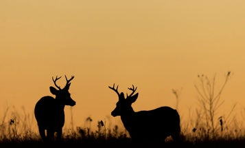 New York Should Let Hunters Shoot Deer During the Best Hunting Hours