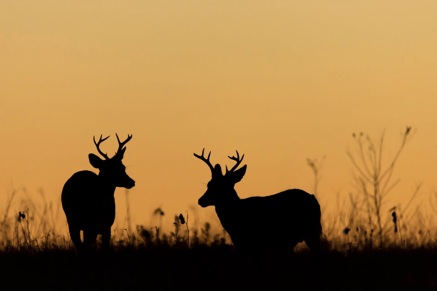 New York's current hunting laws prevents deer hunting after sunset.