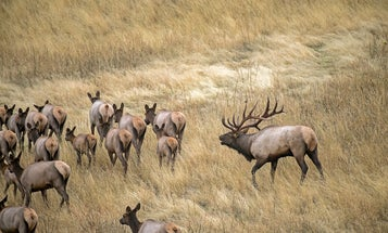 Crowds Moved in on Your Big-Game Hunt? Make the Hunting Pressure Work for You