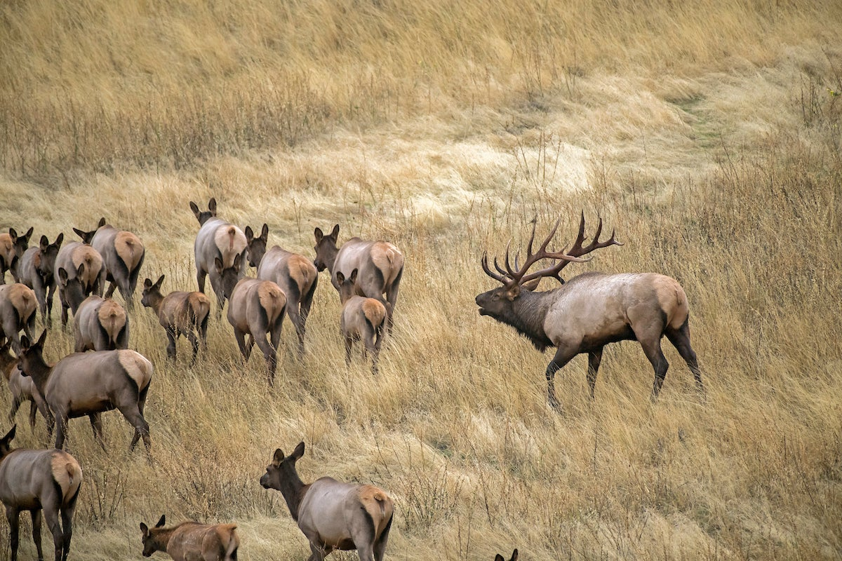 Hunting pressure can cause your big game hunts to go awry, unless you know how to turn it to your advantage.