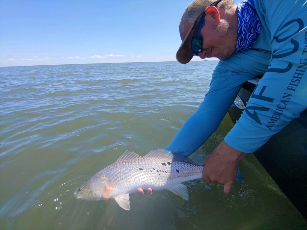Redfish released from shimano nasci spinning reel