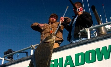 Best Gaff: Get that Fish on the Boat and into the Box