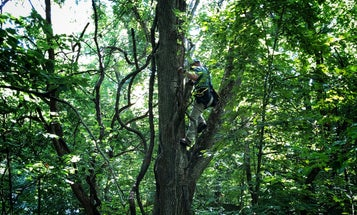 DNR Officer Tracks and Rescues 75-Year-Old Who Fell 30 Feet While Retrieving His Treestand