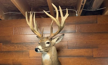 Ohio Crossbow Hunter Finds His Massive Buck Two Years Later…on Facebook