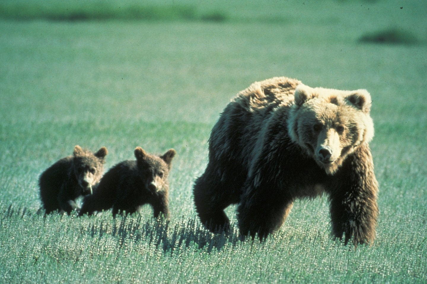 Two hikers were attacked by a grizzly.