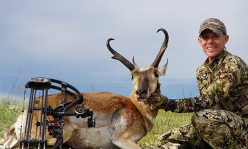 Didn't Draw a Tag? Here are 3 of the Best States to Hunt Last-Minute Pronghorn