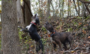 The Ultimate Guide to Buying and Training a Squirrel Dog