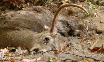 EHD Could Take a Lethal Toll on Deer During Record Drought