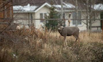 """The """"Zoom Towns"""" in the West Could Hurt Big-Game Migrations"""