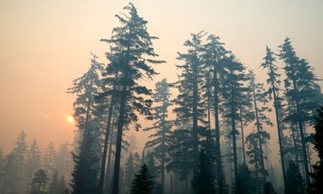 The Outdoor Life Podcast: Will Wildlife Survive Extreme Drought and Wildfires?
