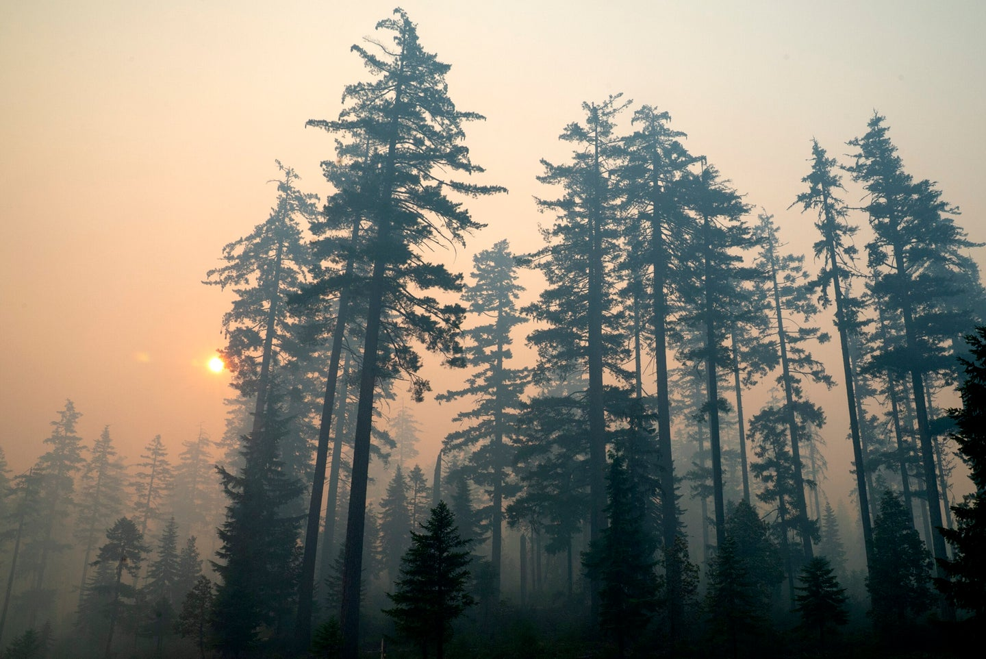 Western drought and wildfires spell bad news for wildlife.