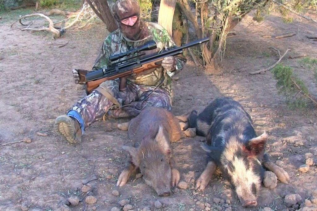 BullBoss pig hunting