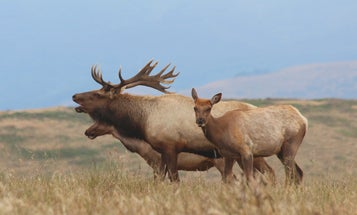 Volunteers Are Lugging Water for Miles to Save California's Tule Elk