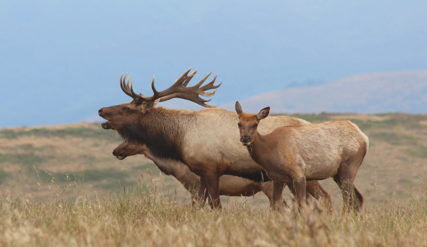 Tule elk can only be found in California.