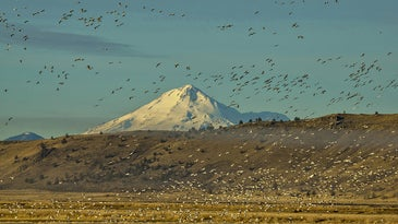 Lower Klamath NWR will get water this fall.