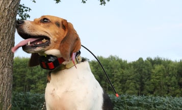 Garmin Alpha 10 Review: A Reliable Dog Tracking and Training Handheld