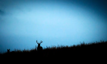 The Best Days to Hunt the 2021 Whitetail Rut, Based on Moon Phases