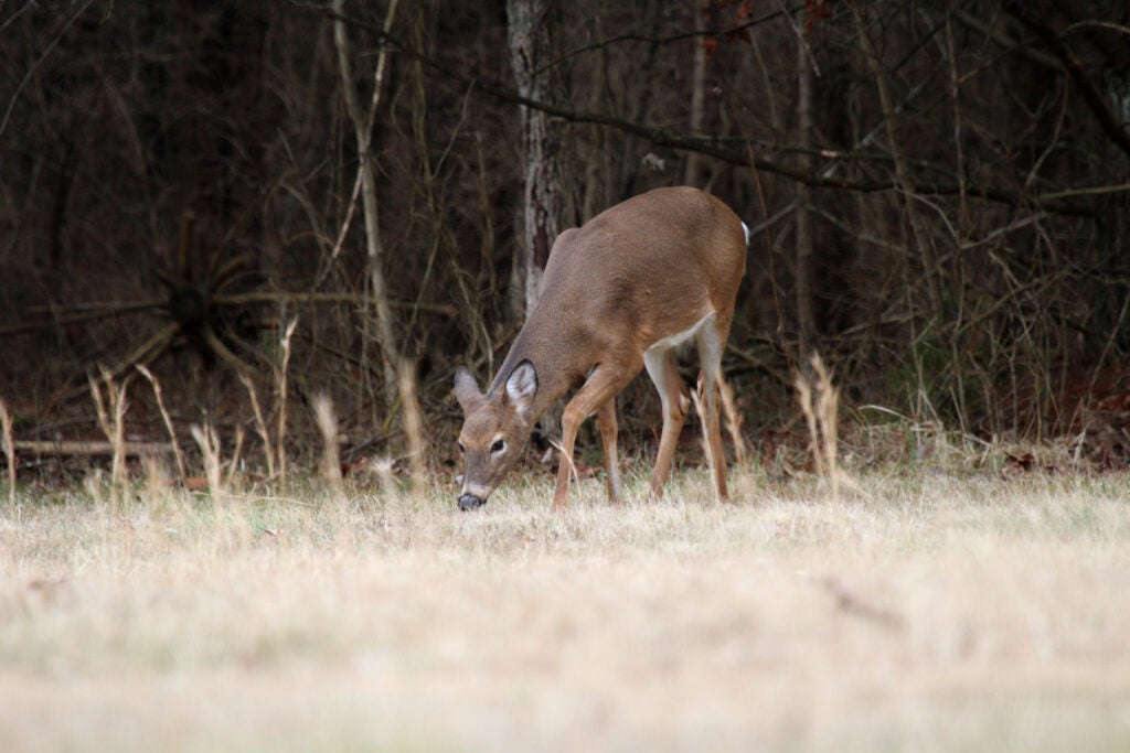 Field to table hunting attracts some hunters, but you have to be i.