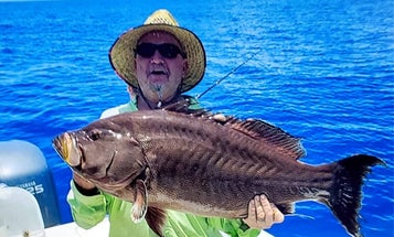 Florida Accepts Three New Saltwater Fishing Records