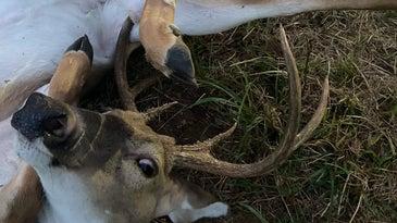 After a deer got tangled in its own legs, an Arkansas hunter saved the buck.