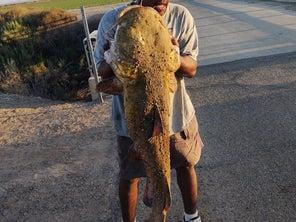 Fishermen Catch Arizona's Would-Be Record Flathead Catfish, Then Fry It