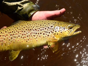 The Future of Trout Fishing in the West Could Be in Hot Water