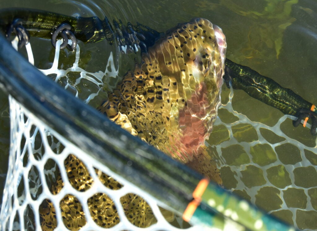 Trout are suffering from the extreme Western drought conditions.